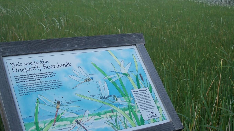 Interpretive panels tell the story of this internationally recognized wetland – Nick Berzins