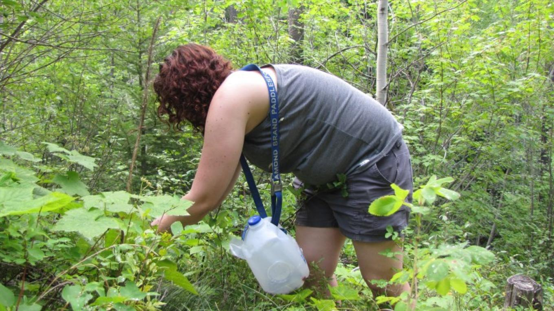Huckleberry Picking on Crane Mountain above Bigfork, MT – Sheena Pate