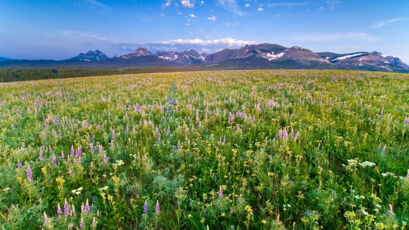Some of North America\'s best remaining unplowed prairie is found on the Rocky Mountain Front – Tony Bynum