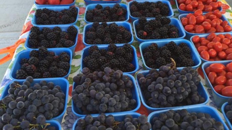 Fresh Seasonal Fruit – Kimberly Hurst
