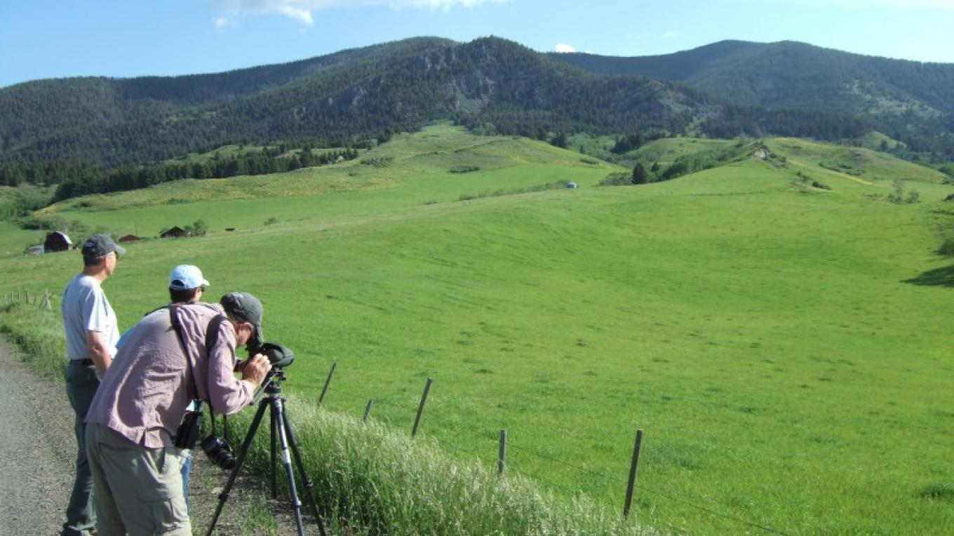 Birdwatching near Highwood Mountains- Belt, MT. – Gayle Fisher