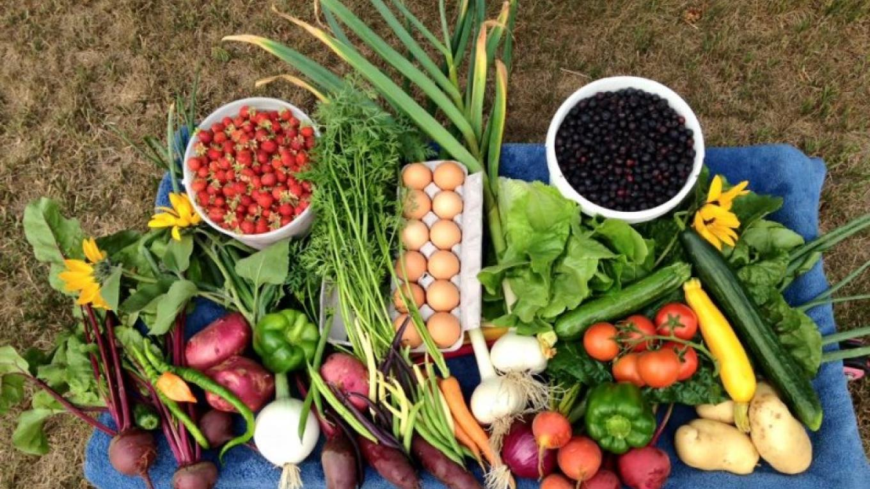 Fresh local produce and eggs – Kimberly Hurst