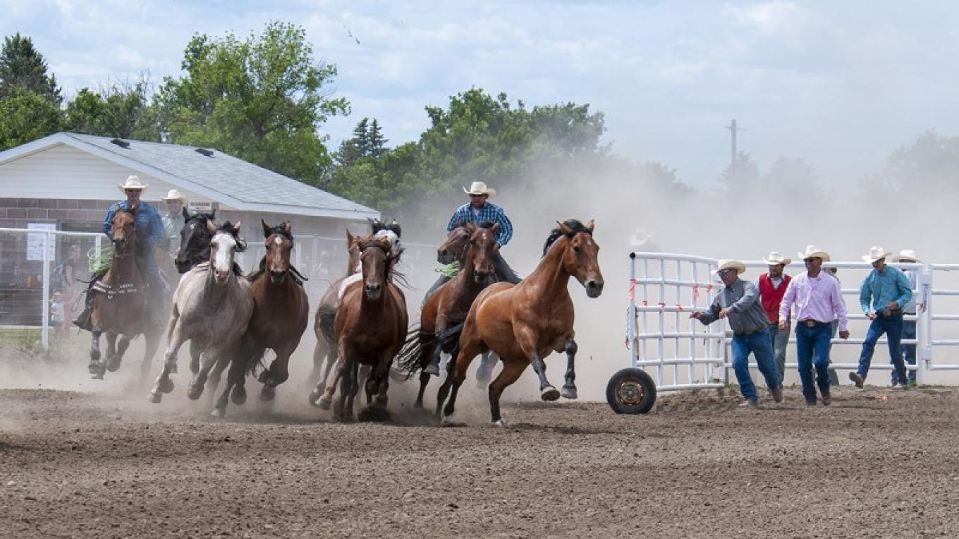 Running of the rodeo horses - 2019 – Trevor Page