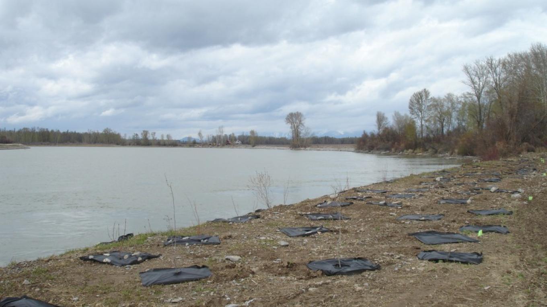 Flathead River Revegetation Project – Constanza von der Pahlen