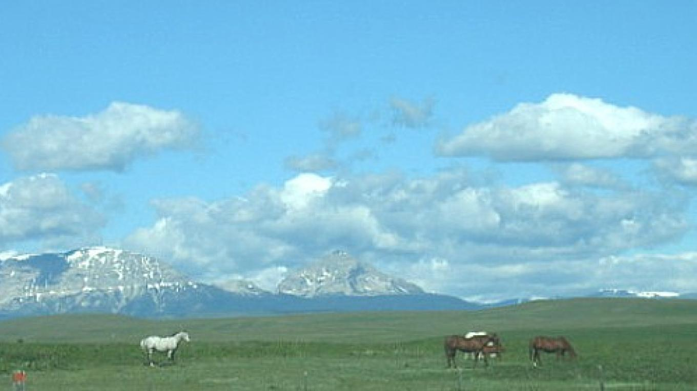 Horses below Divide Mountain just west of Browning Montana – Colleen's Computer Corner, LLC