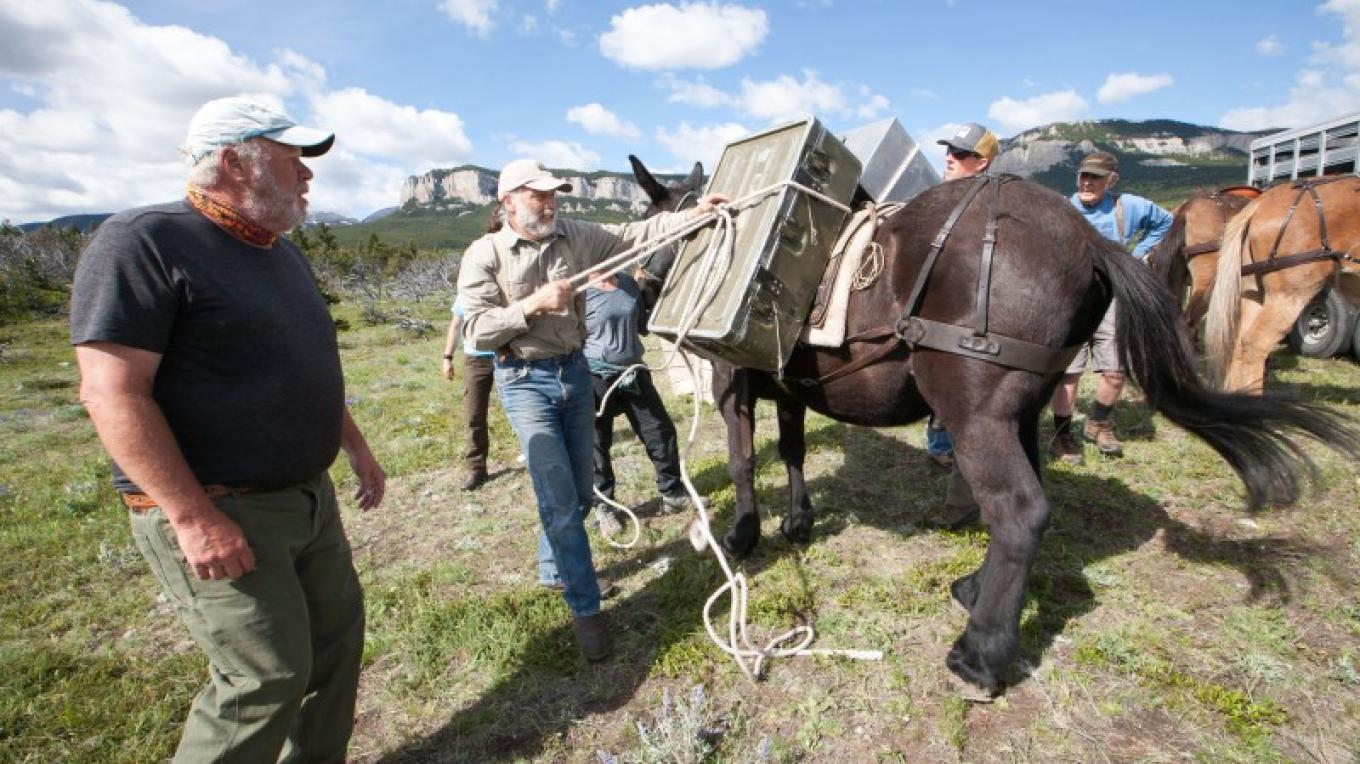 Bob Marshall Wilderness Foundation works with volunteer packers to carry gear and equipment. – Sheena Pate
