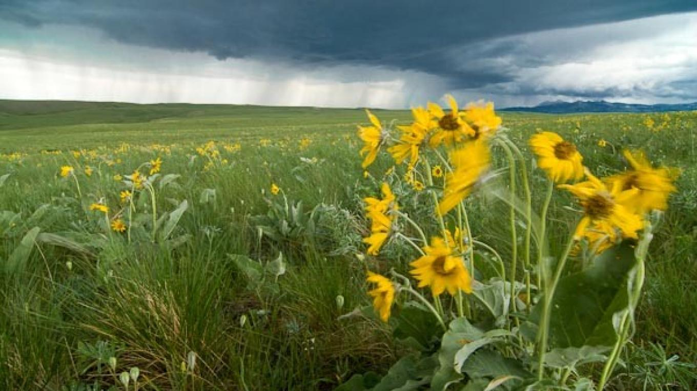Spring storm and balsam along the rocky mountain front, MT – tonybynum.com