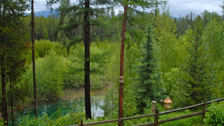 Bird and pond habitat – Raven Moss