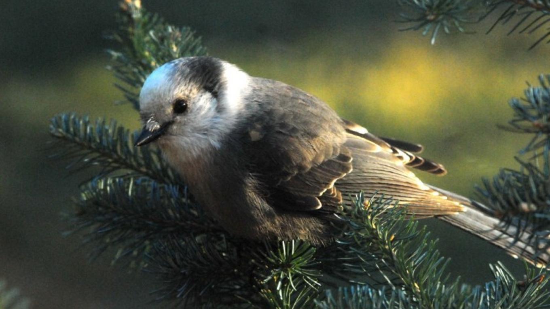 Audubon Bird Count – Debra Moss