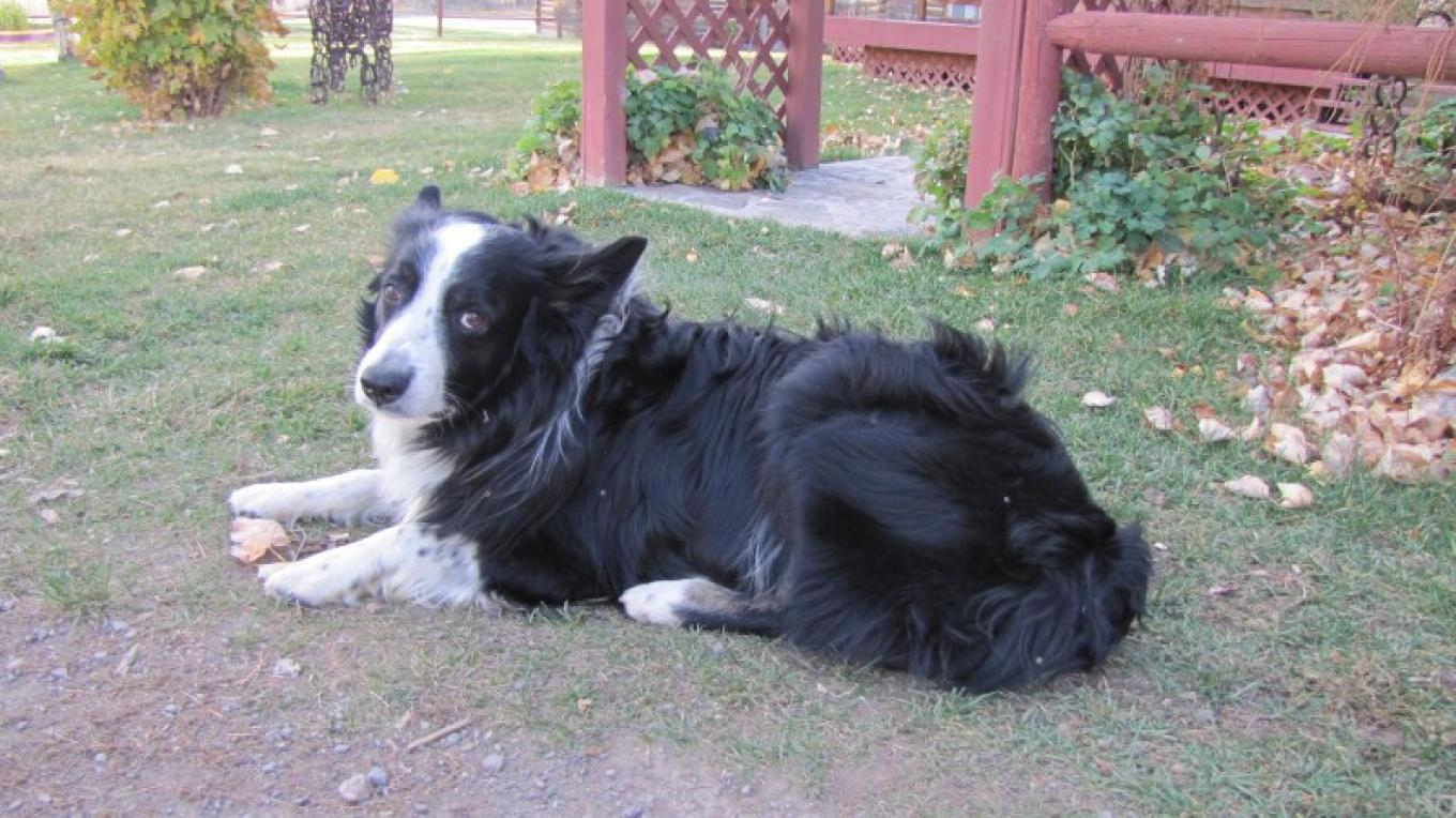 Faithful Ranch Companion – Sheena Pate