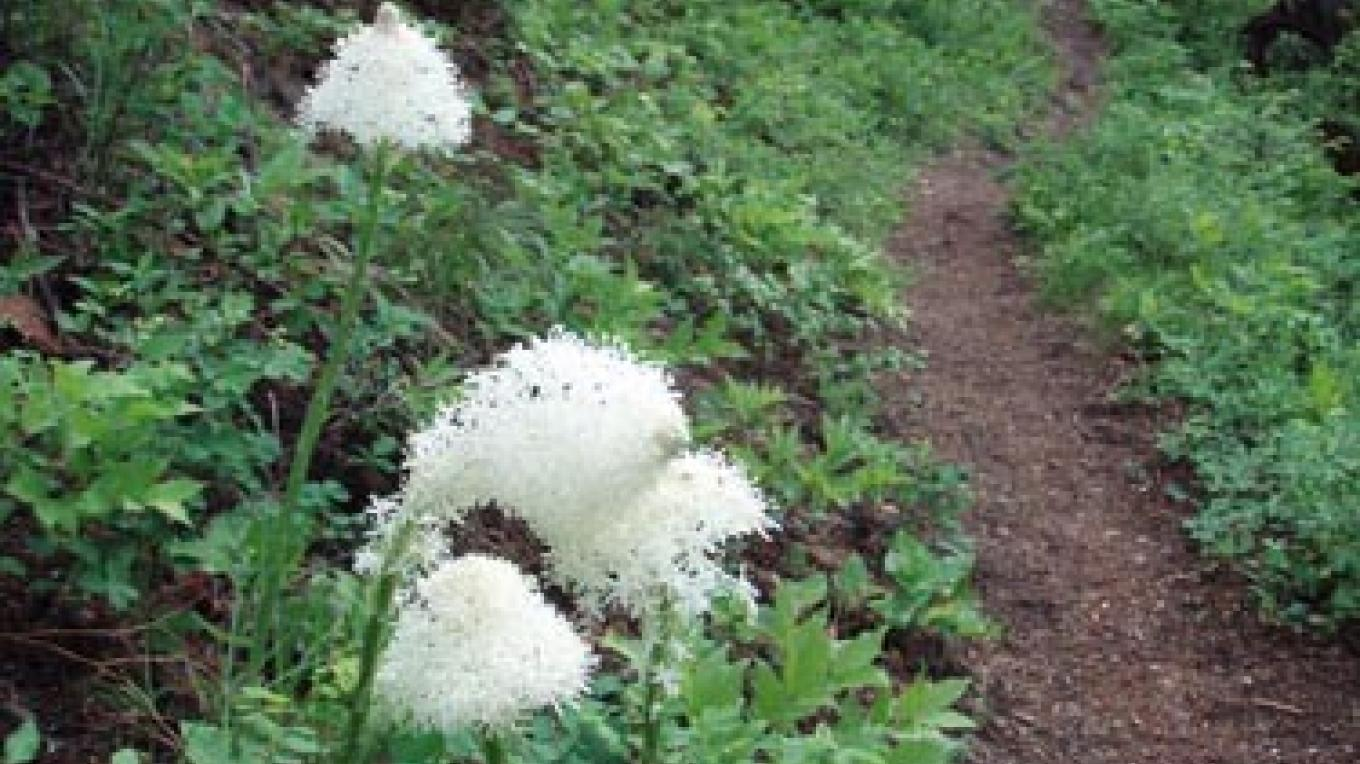 There\'s nothing like a good hike for discovering wildflowers like this bear grass. – Keith Hammer