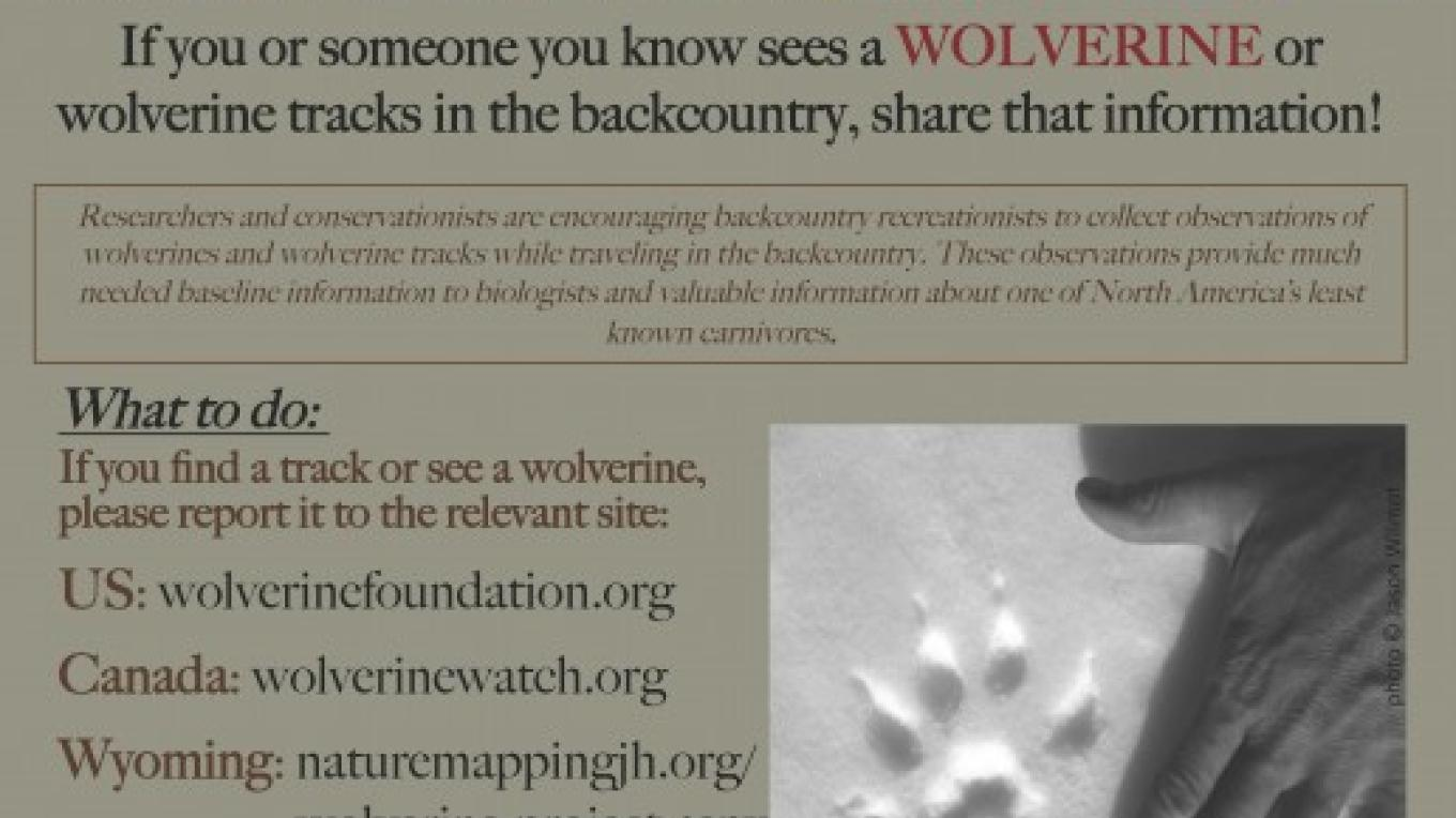 Backcountry Wolverine Project Poster