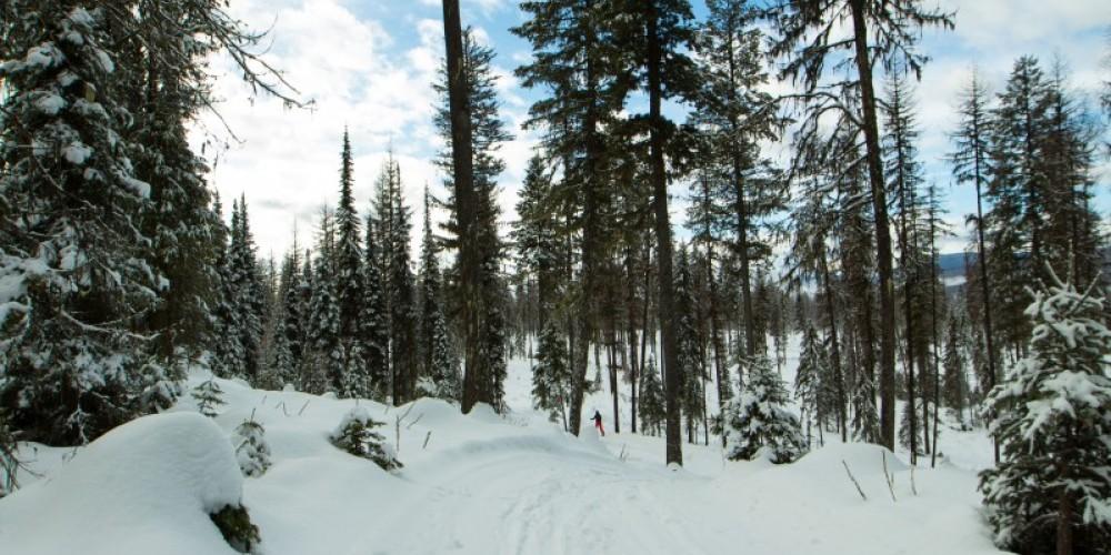 Dog Creek Nordic Trails – Sheena Pate