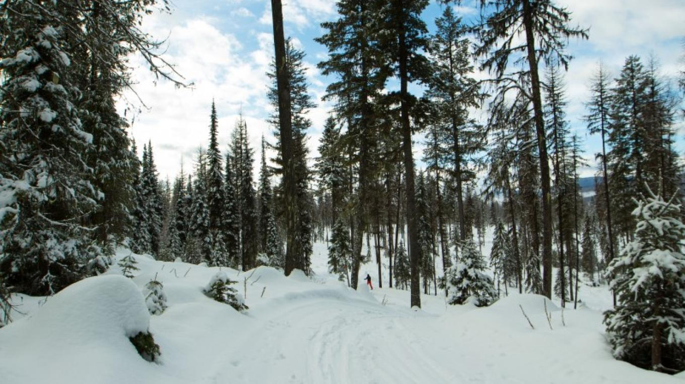 Dog Creek Nordic Trails – Sheena Pate