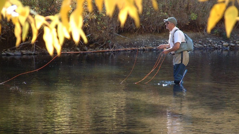 Autumn cottonwood leaves frame late-season angler on the Crowsnest River. – David Thomas