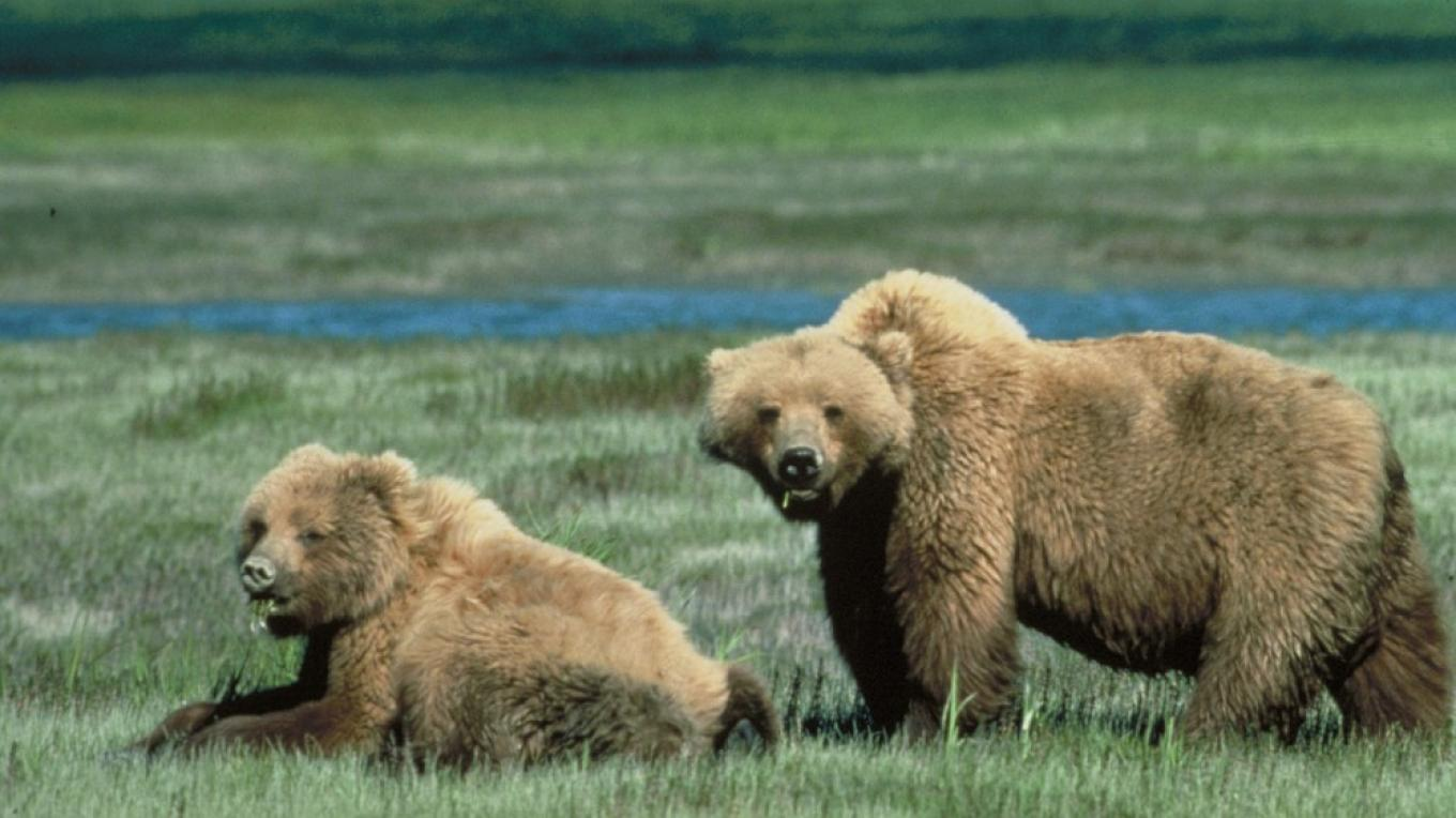 The Crown of the Continent is a stronghold for grizzly bears and other large animals, largely because vast wilderness areas have been protetected and wildlife is able to move across large landscapes. – Chris Servheen, courtesy U.S. Fish and Wildlife Service
