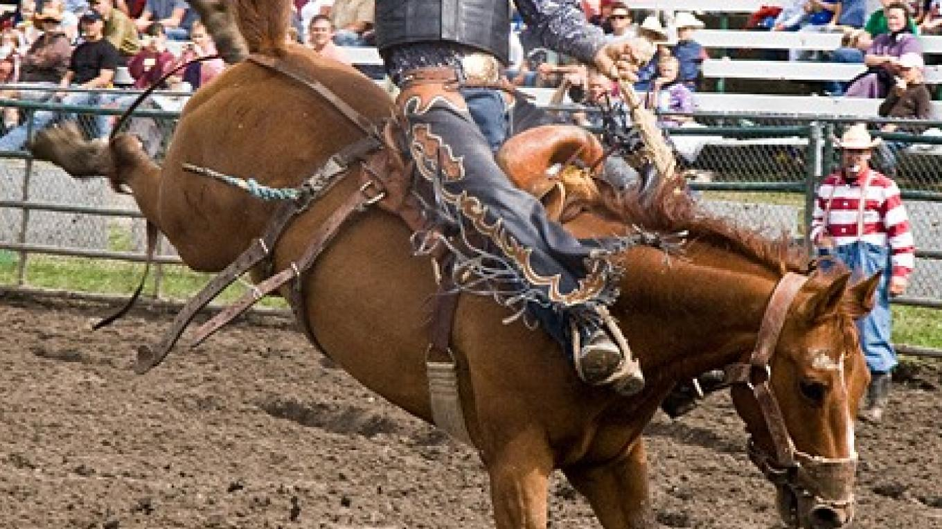 Saddle bronc riding is a tough, but fundamentally friendly test of strength. – David Thomas
