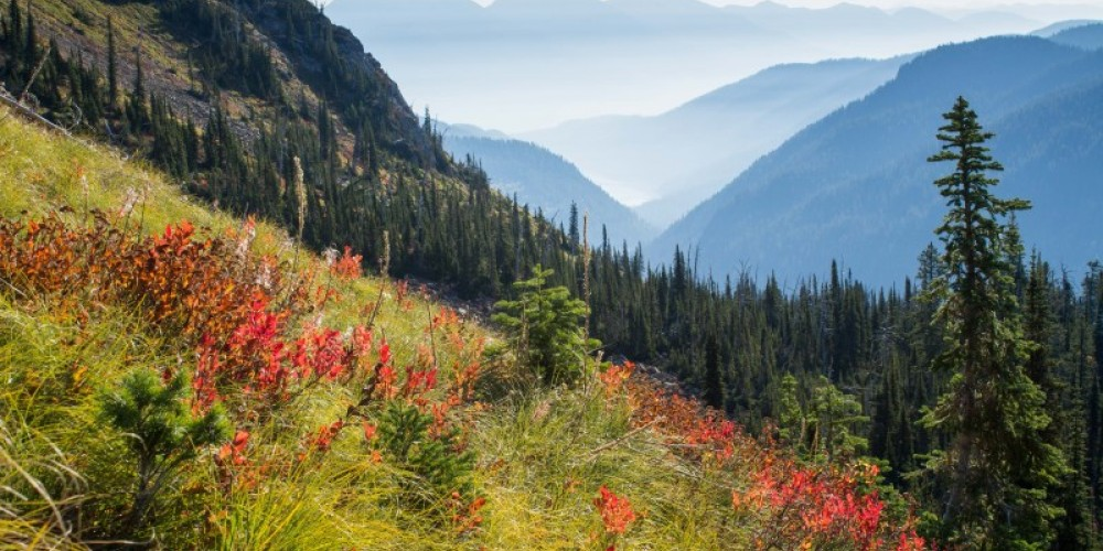 Fall huckleberry color, Jewel Basin, huckleberry and beargrass bushes, NW Montana – Dee Linnell Blank
