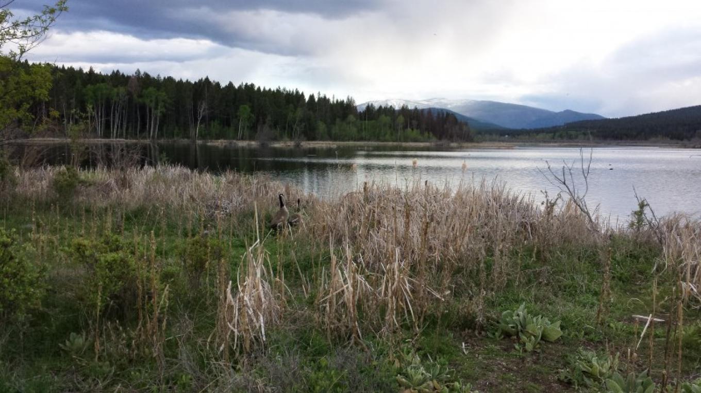 Elizabeth Lake Bird Sanctuary
