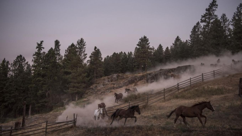 Three Bars Guest Ranch – Kari Medig