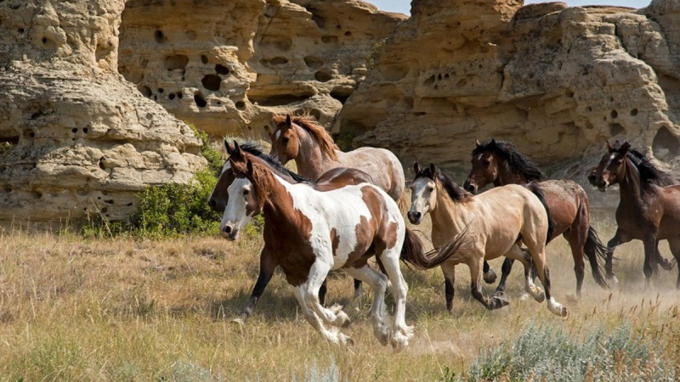 Running the horses through the hoodoos. – Trevor Page