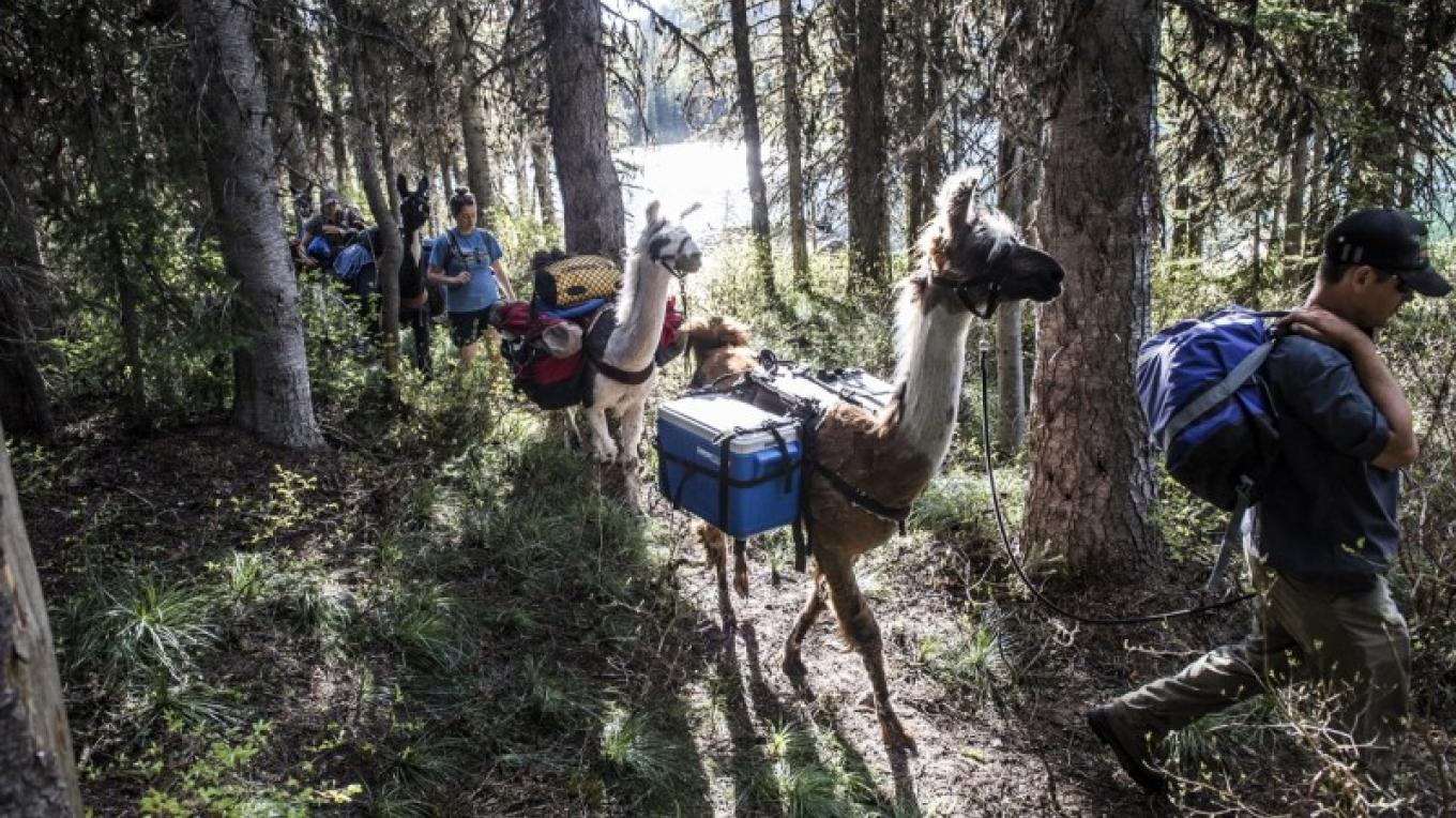 Llamas are sure-footed, trusty hiking companions that do the heavy lifting for you. – Ami Vitale