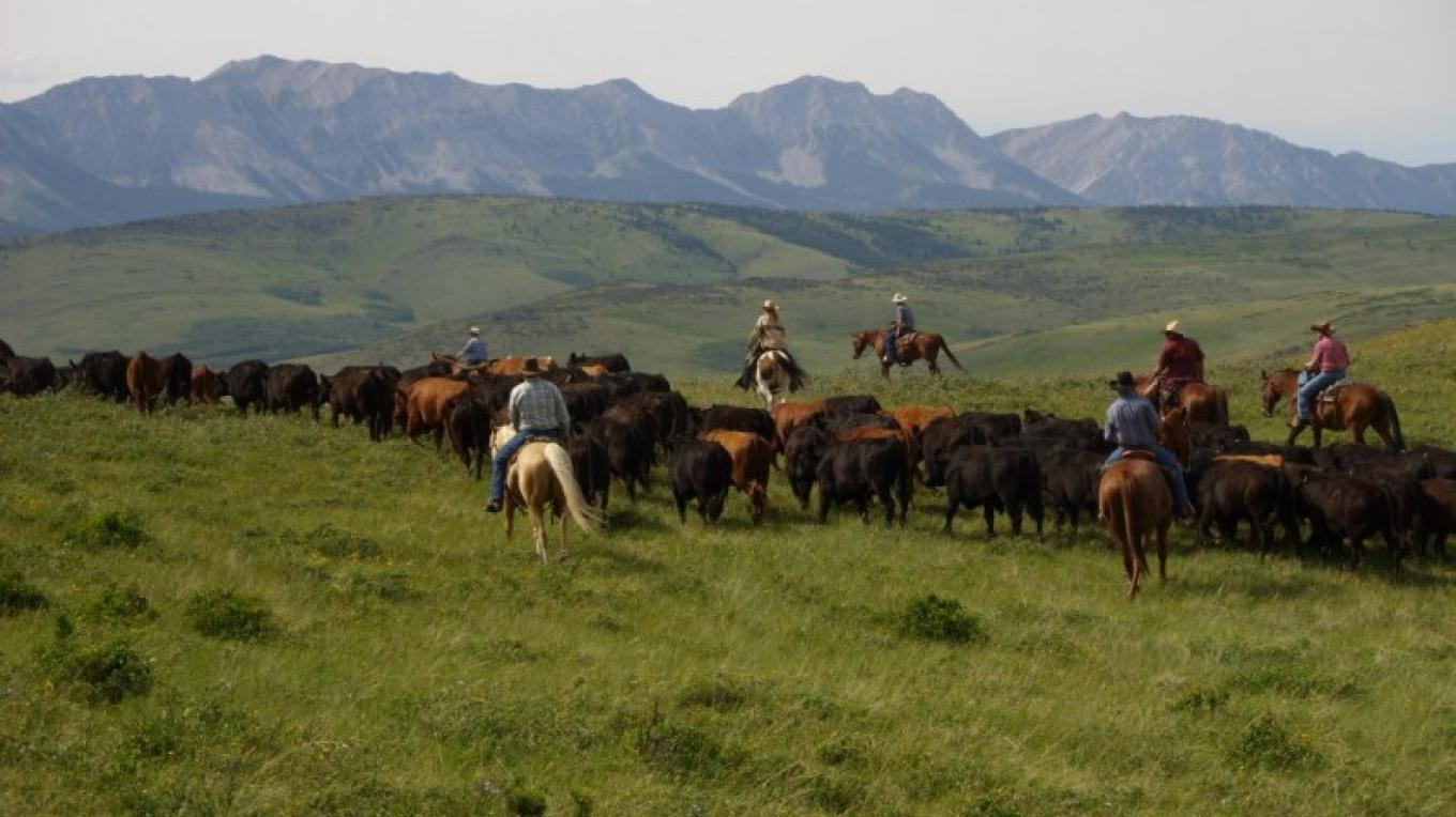 """Frontier Cattle Drive"" – Ginny Donahue"