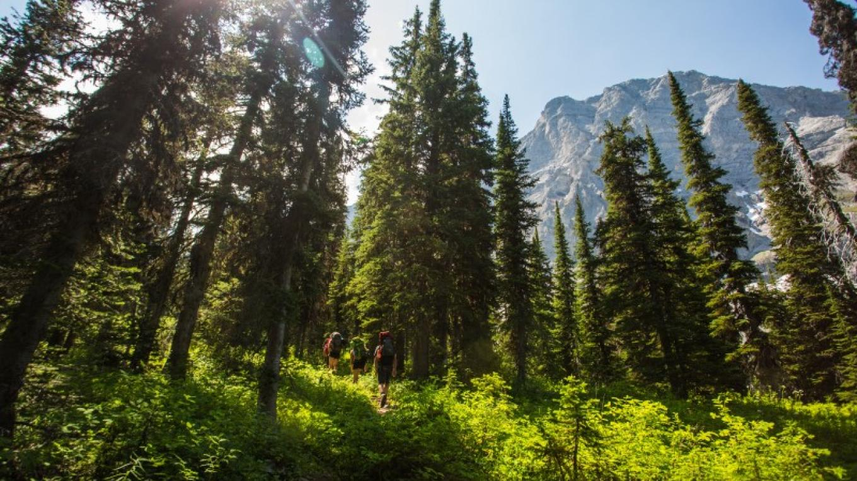 Heiko's Trail – Tourism Fernie