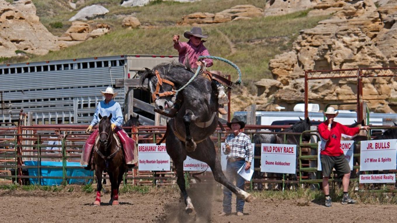 Saddle Bronc. – Trevor Page