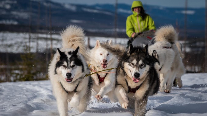Dog Sledding in NW Montana – Courtesy Base Camp Bigfork