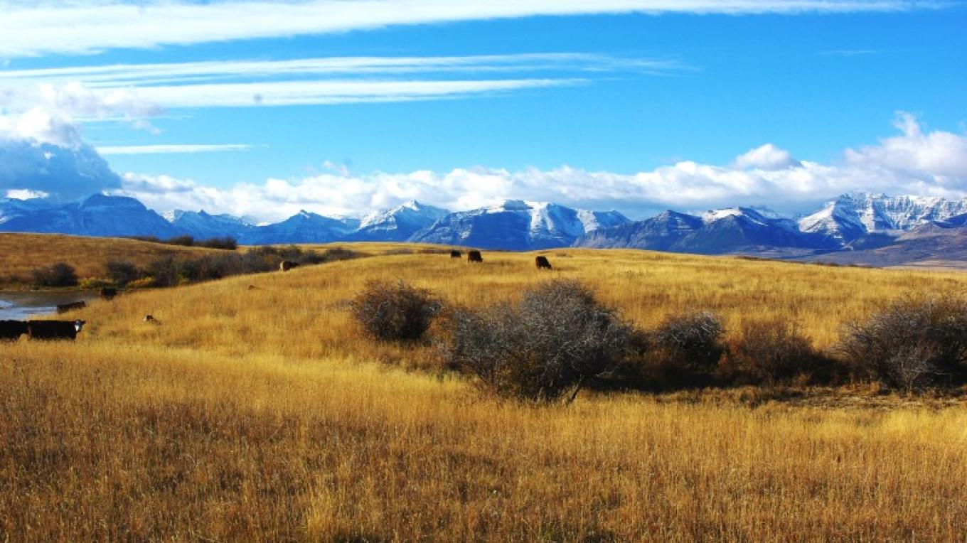 Palmer Ranch, Waterton Park Front Natural Area, AB – Nature Conservancy of Canada