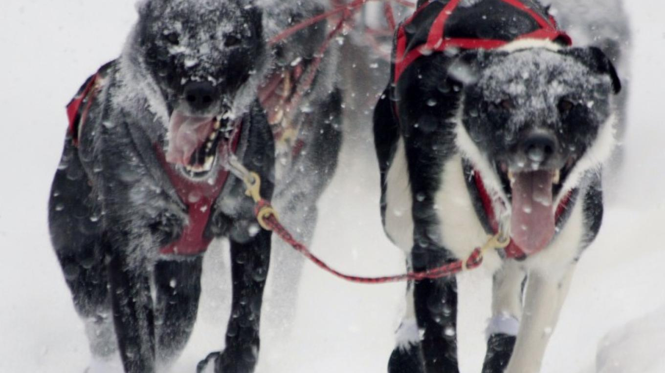 Flathead Classic Sled Dog Race – Mountain Photography