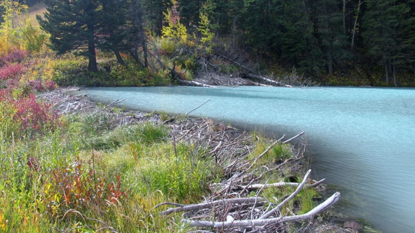 Sulfur spring turns beaver pond aquamarine – David Thomas