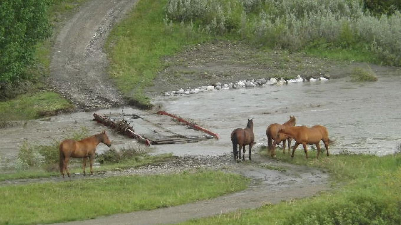 Flood 2013 - Horses find themselves on the wrong side of the creek . . . the water is too deep and fast to swim across. – Deb Webster