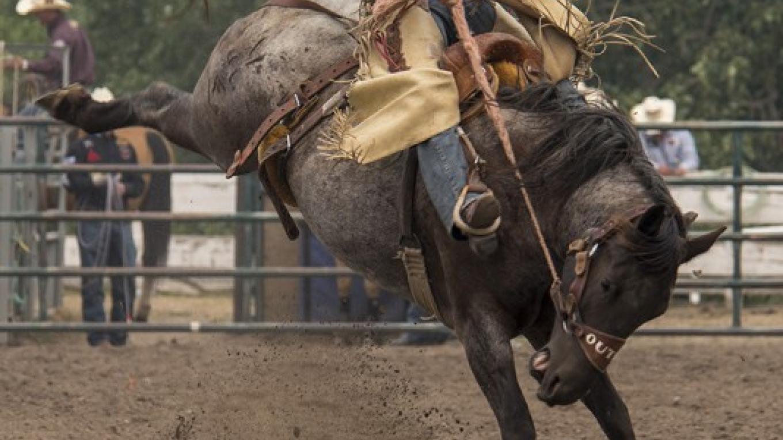 Saddle Bronc - 2018 – Trevor Page