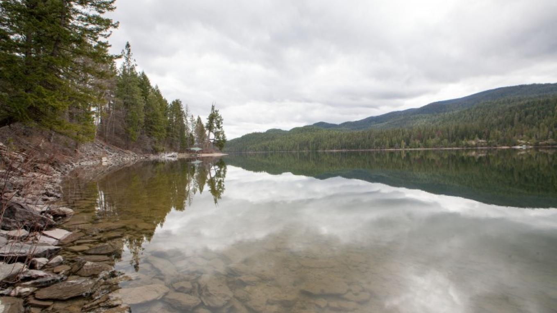 Swan Lake – Sheena Pate