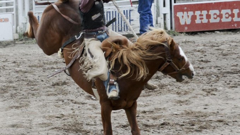 Bronc Riding - 2013 – Roger M. Dey
