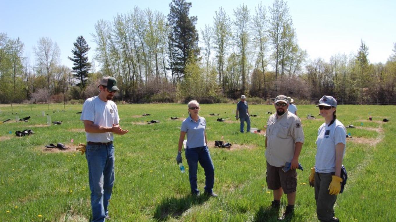 Volunteers help Montana Fish, Wildlife and Parks plant cottonwoods – Constanza von der Pahlen