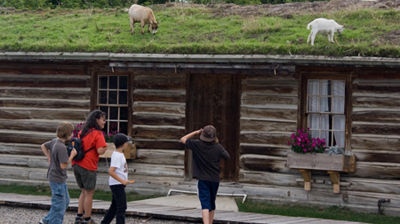 Fort mascots keep sod roofs neatly mowed. – David Thomas