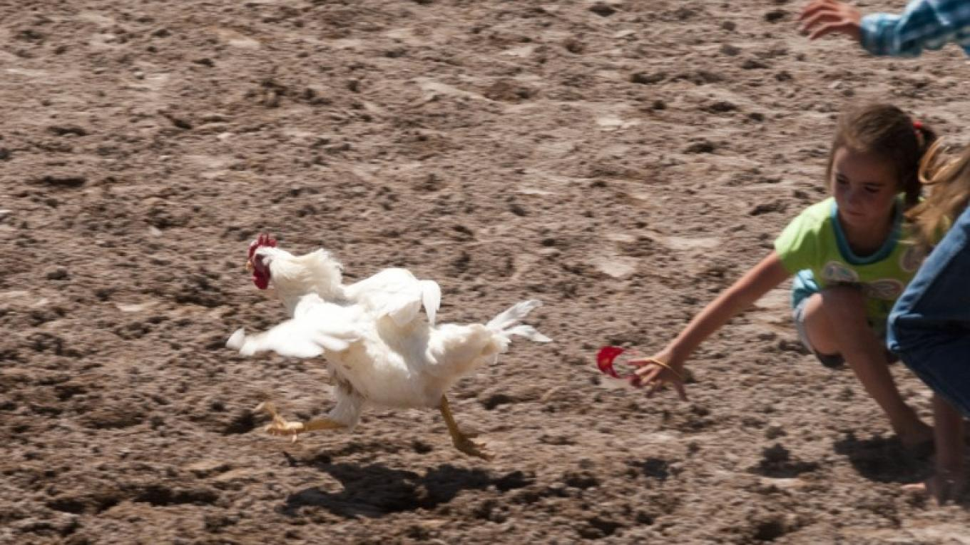 Kids have fun in the Chicken Chase – Roger M. Dey