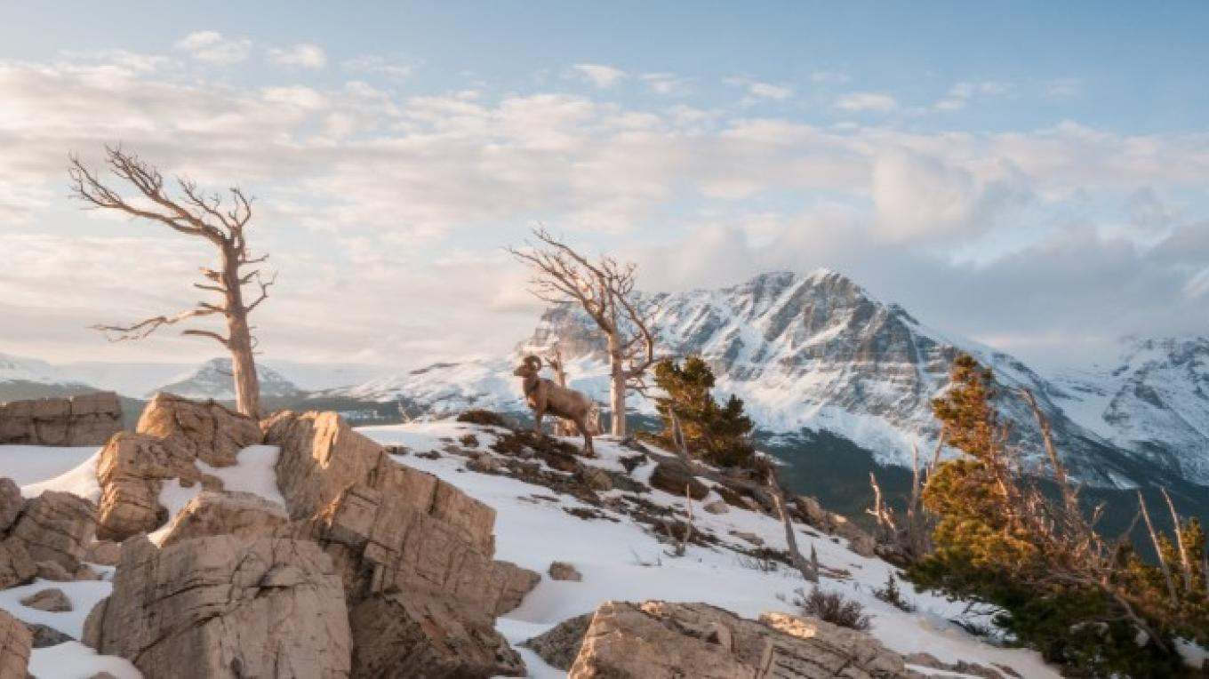 Rocky Mountain Front – Steven Gnam Photography