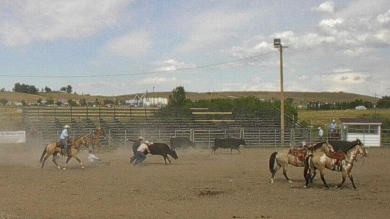 Wild Cow Milking – Paul Raczka