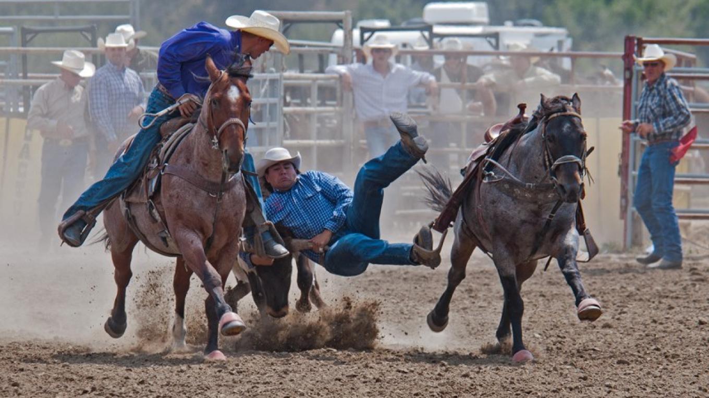 Steer Wrestling. – Trevor Page