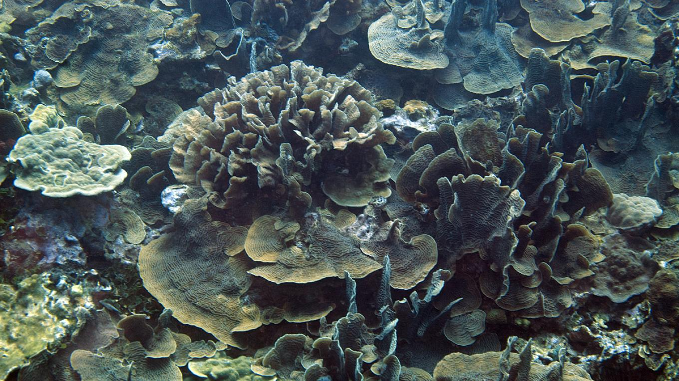 Cordelia Banks boasts an astonishing 70% live coral cover – Ian Drysdale