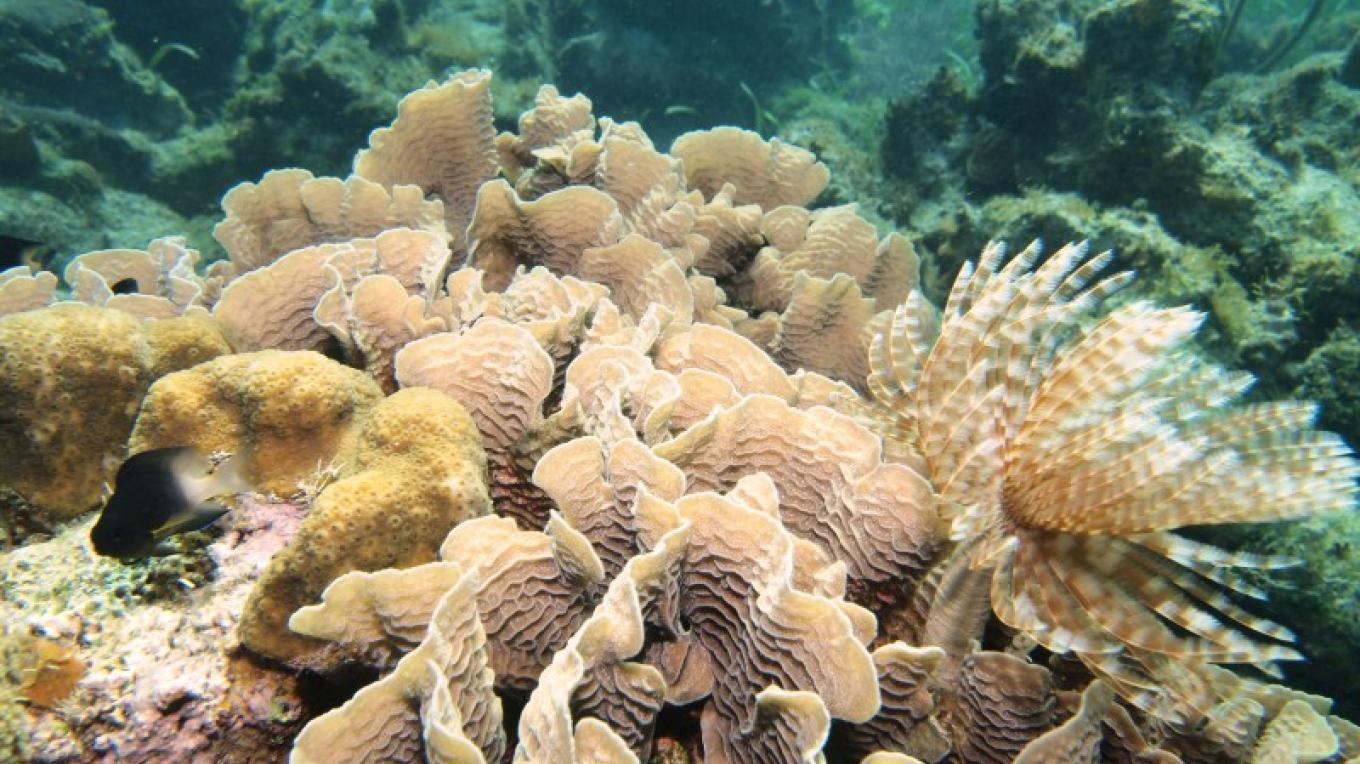 Healthy coral reefs are needed for a healthy and sustainable tourism industry. – Manlio Martinez