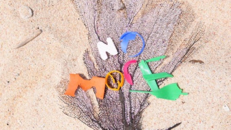 Utila Beach Cleanup