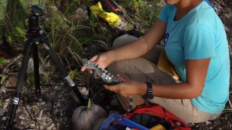 Biologist Andrea Martinez studying the endemic iguana health, body condition and population status / La bióloga Andrea Martinez estudiando la salud, condición y estatus de la población de la Iguana endémica de Utila. – Steven Clayson