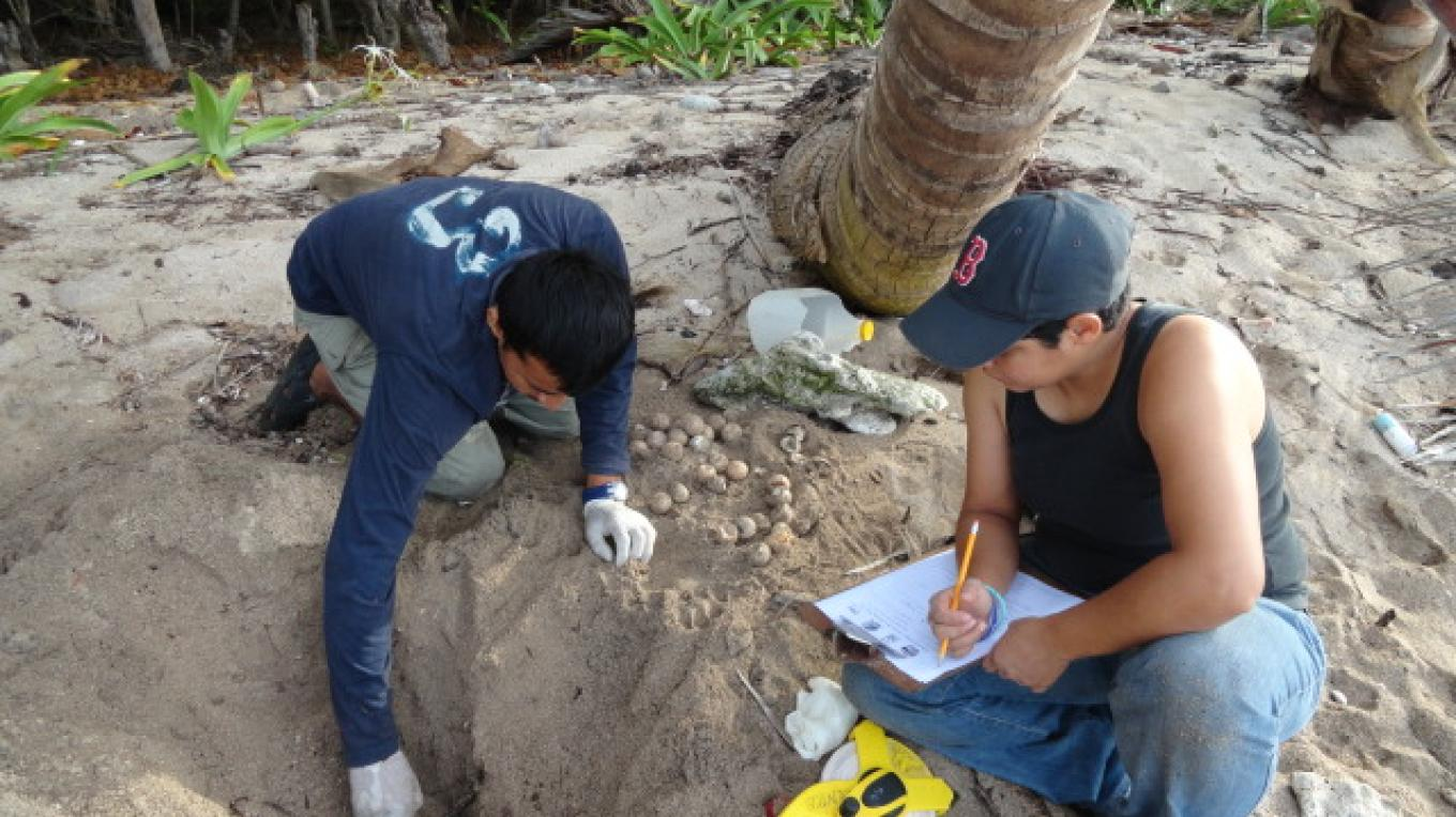 Sea Turtle Nests Monitoring/ Monitoreos de nidos de tortugas marinas – BICA volunteers