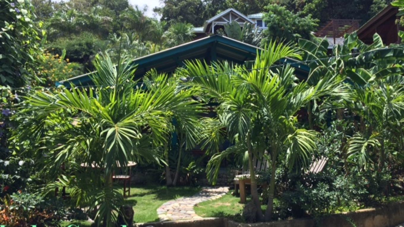 LALA - a lush tropical oasis in the heart of west bay. Our gardens are free for all to enjoy. – Layle Stanton