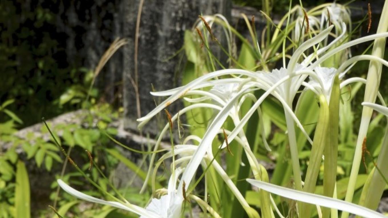 Headstone with flowers / La lápida mortuoria con flores – Carey Satin